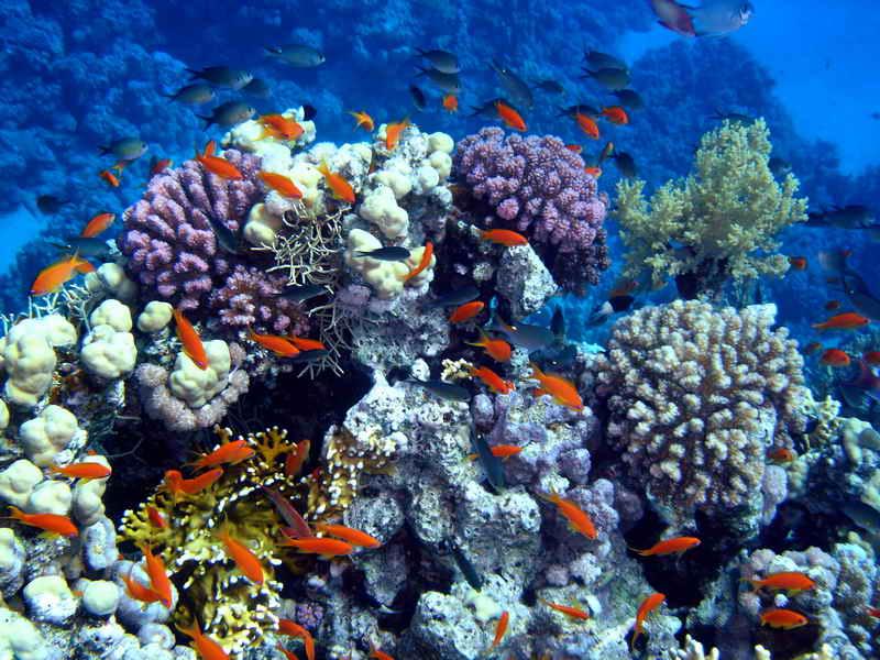 В Таиланде почернели коралловые рифы!