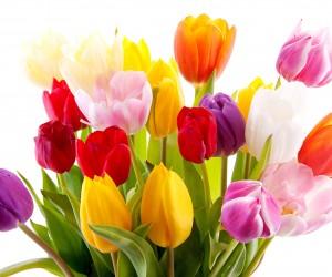 Поздравления  с Международным женским  Днем 8 Марта!