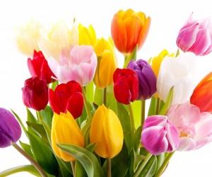 Тюльпаны, доставка
